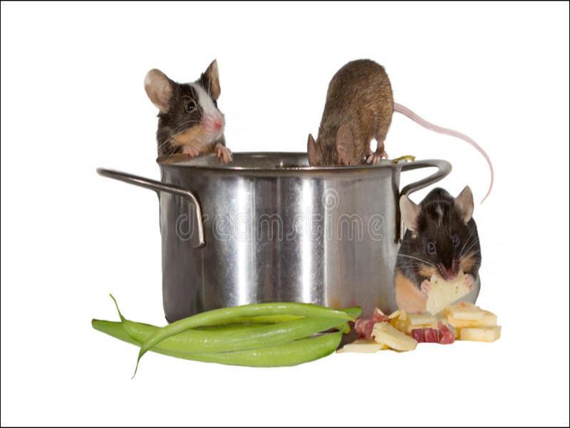 Muizen In De Keuken