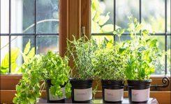 kruidenplantjes in de keuken